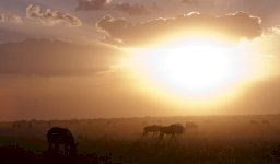 Itaka Safaris - Safaris en Tanzania